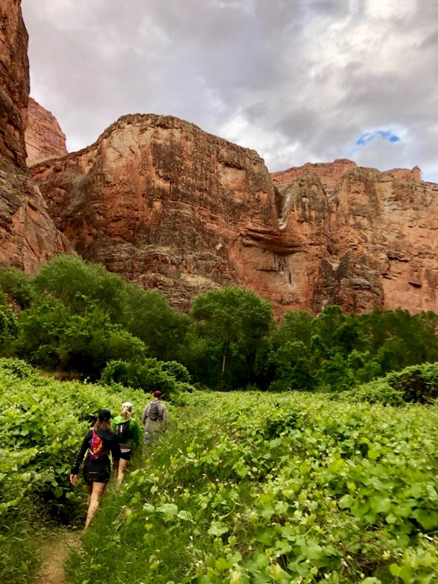 Day hikers walking through lush flora below a red rock canyon.