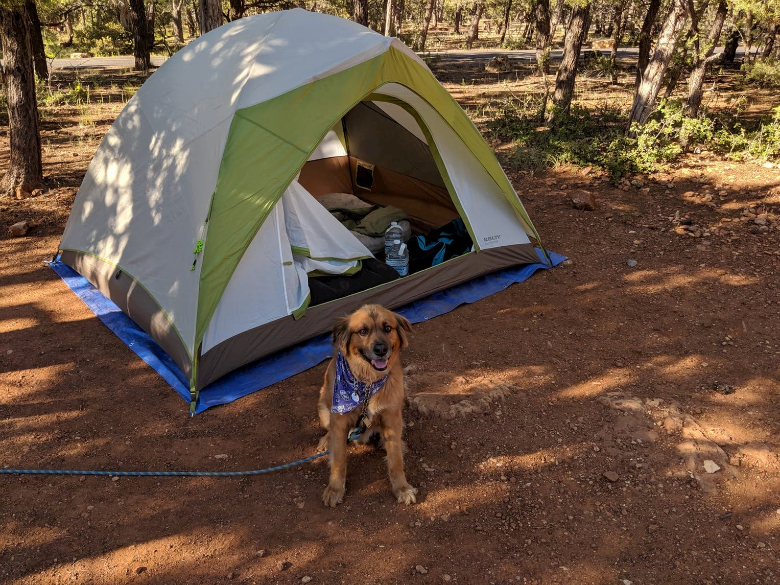 Dog sits in front of tent at Mather campground.