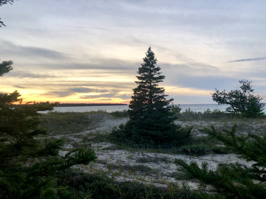 trees and sand at wilderness state park