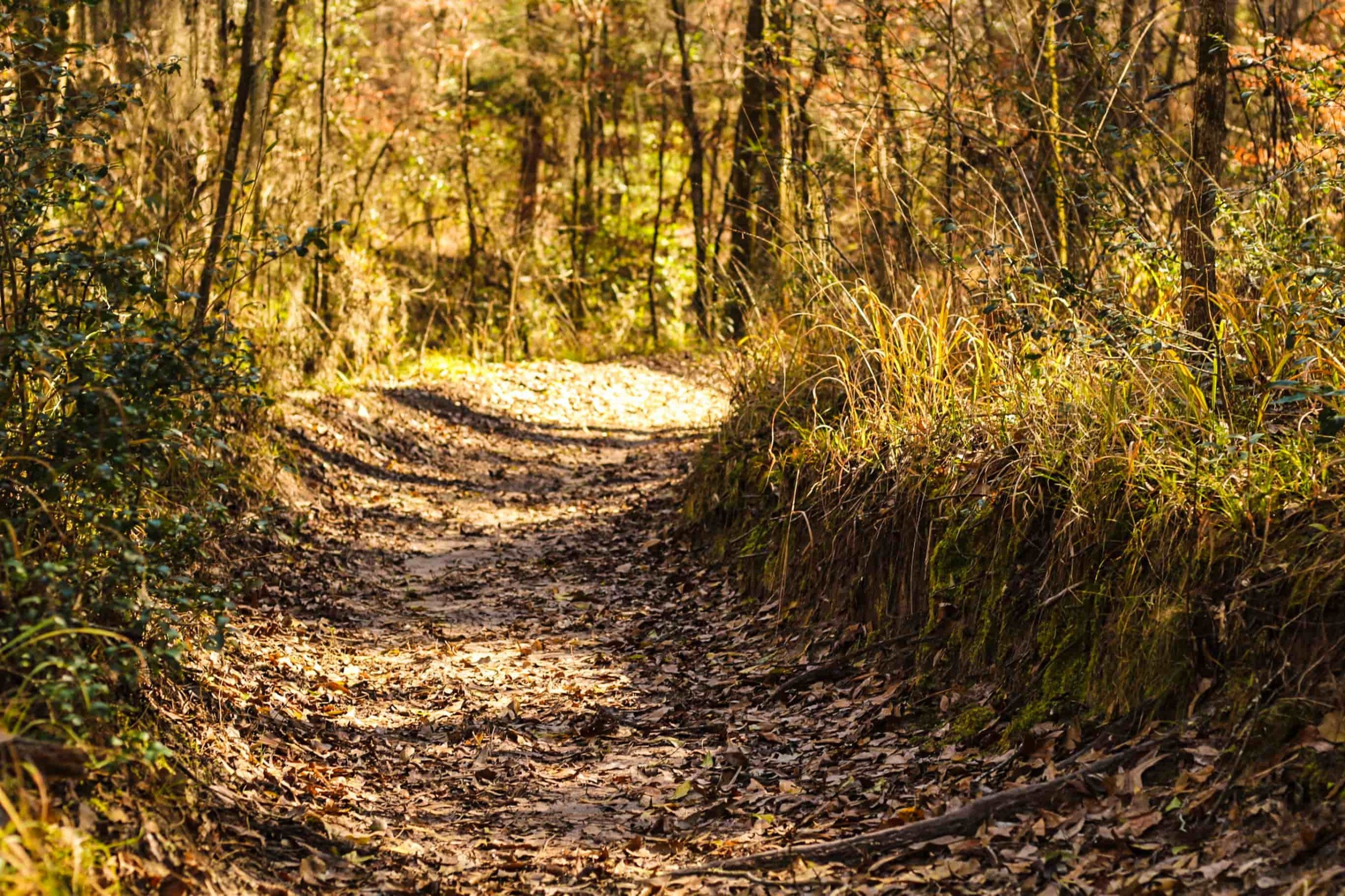 Lone Star Trail through Sam Houston National Forest in the fall.
