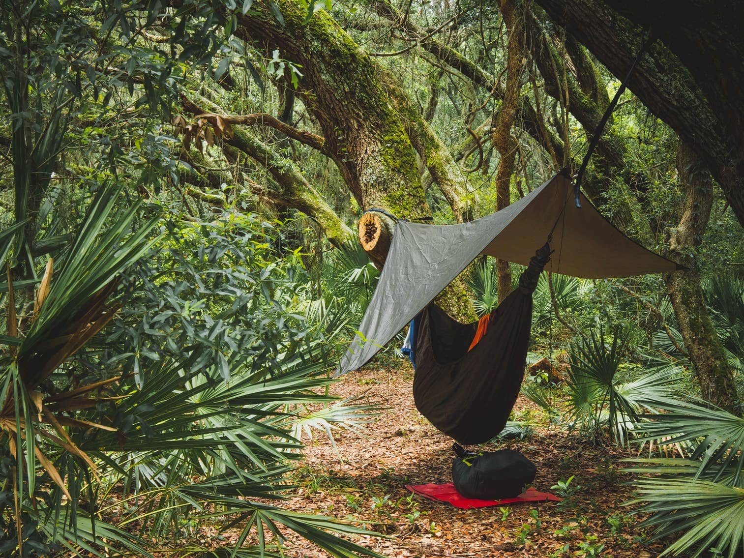 Camping style hammock hung in the jungle under a tarp with gear lying next to it.