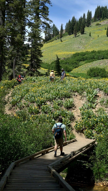 Hikers walking through lush hill landscape over boardwalk bridge.