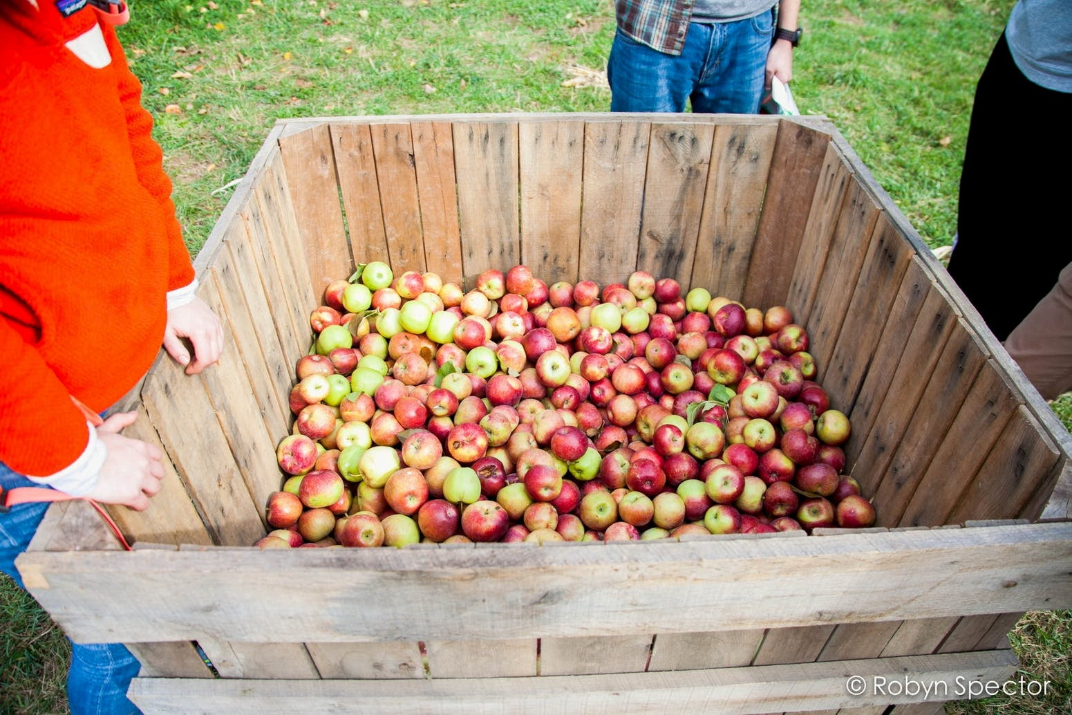People standing around large wooden box of apples.