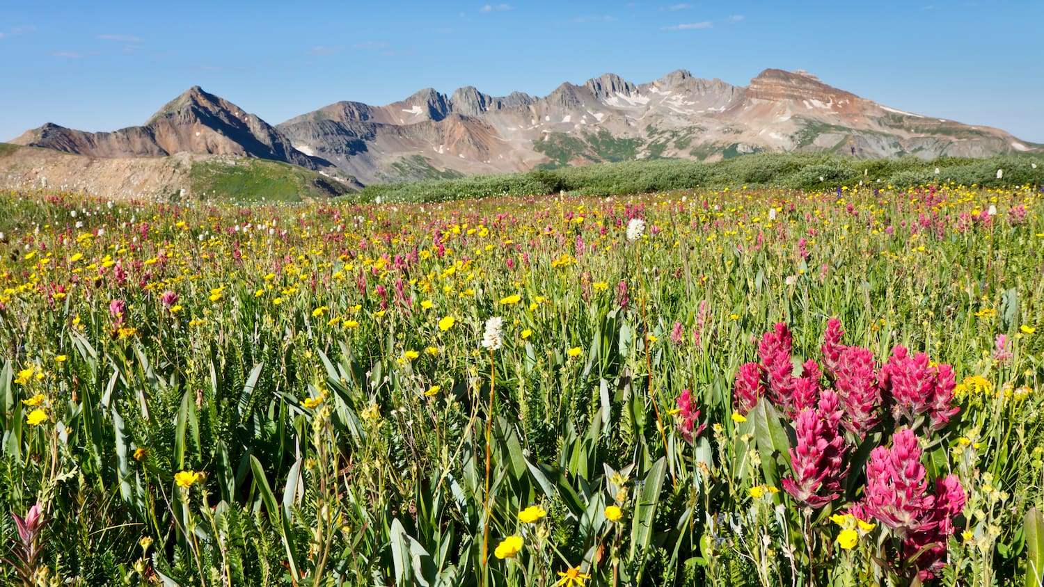 wildflowers in front of mountain range