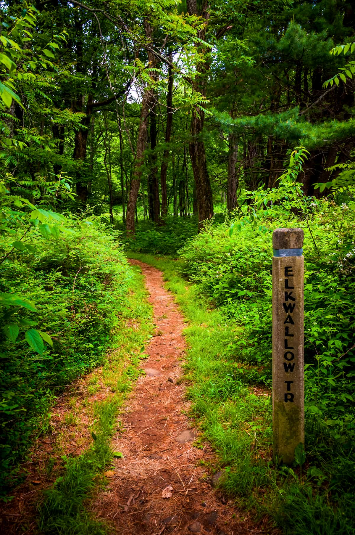 trail winding in the woods