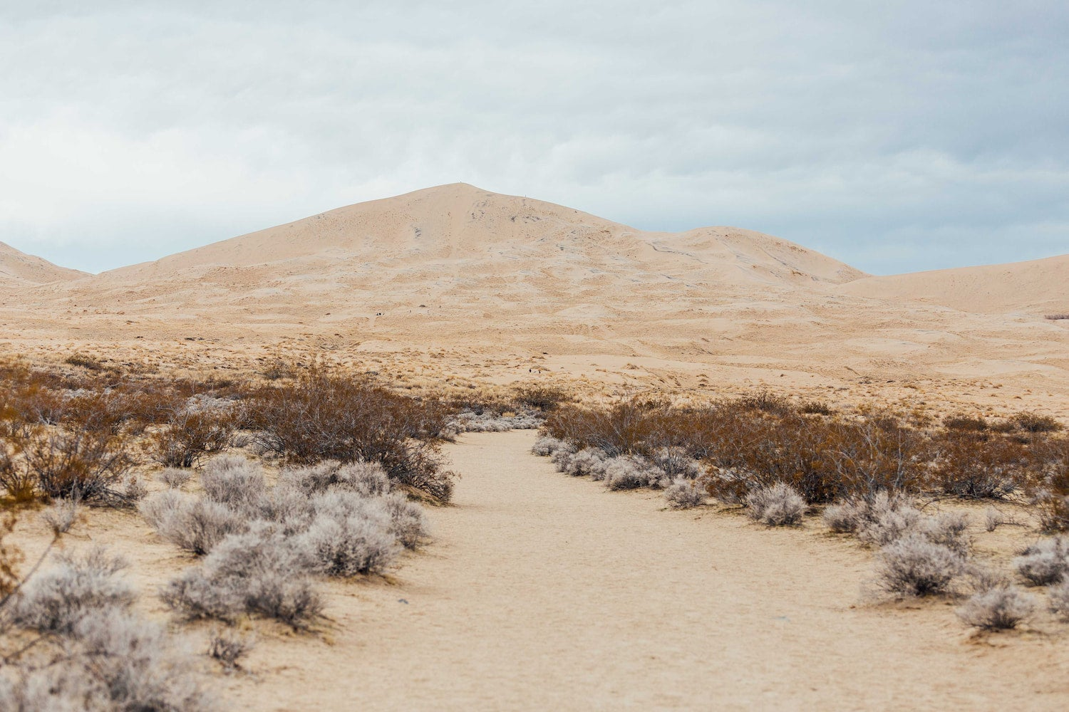 dunes and shrubs in mojave national preserve