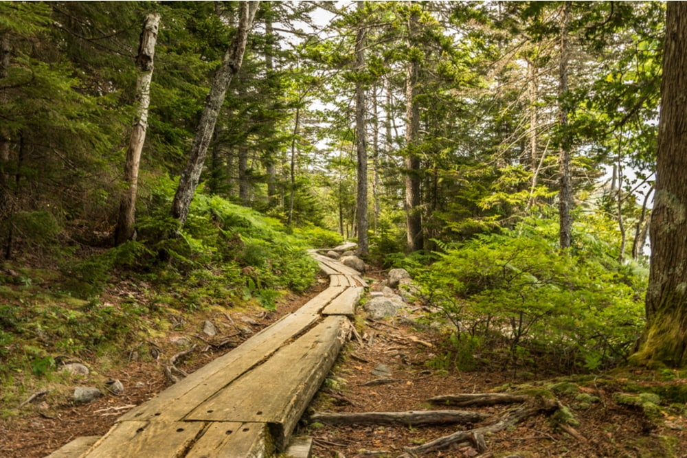 a forest wood acadia national park hiking trail