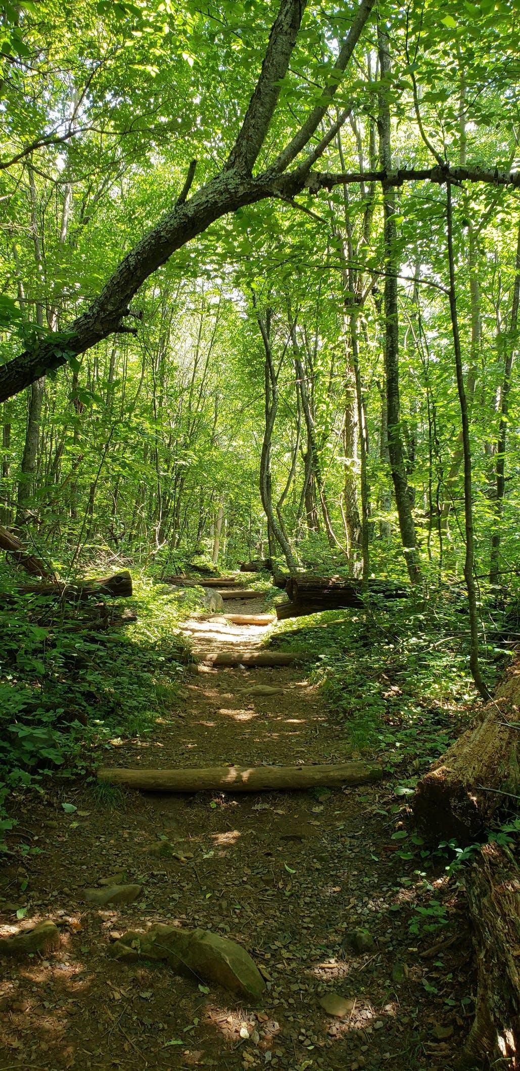 trail near mathews arm campground