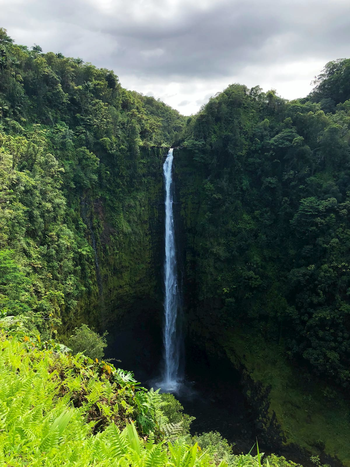 Extremely tall waterfall pouring over lush forested cliffs into a cavern below.
