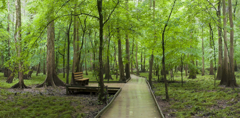 raised pathway at Congaree National Park