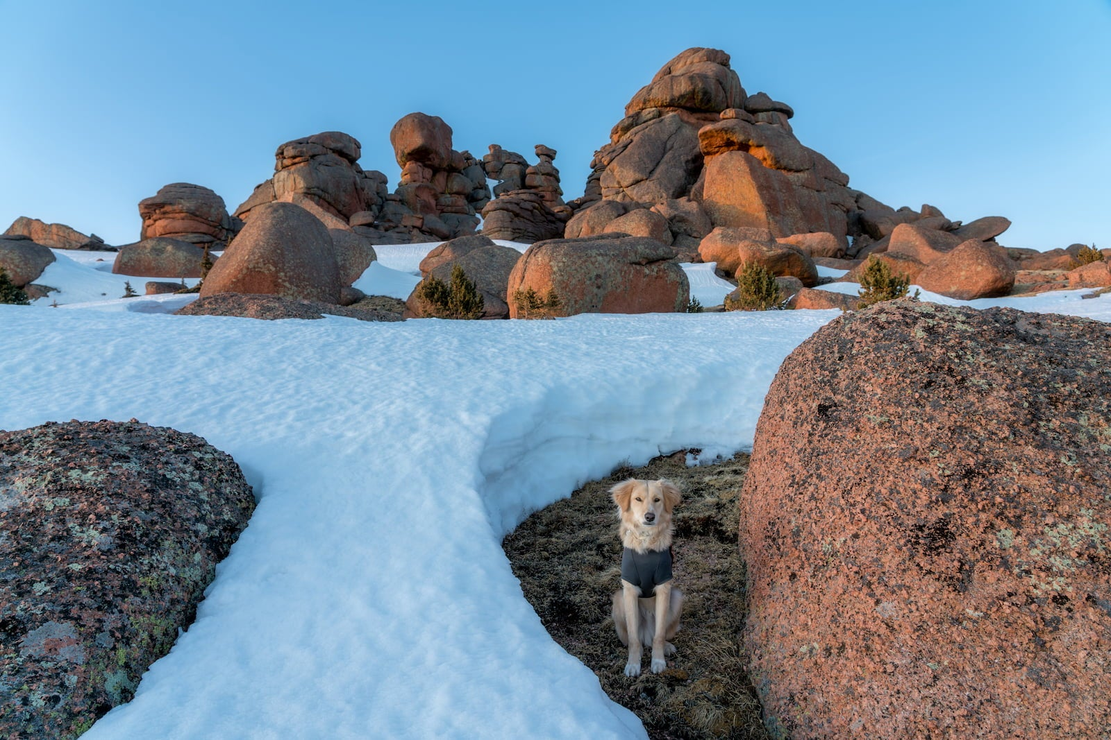 Dog in jacket sitting within snow covered red rock landscape.