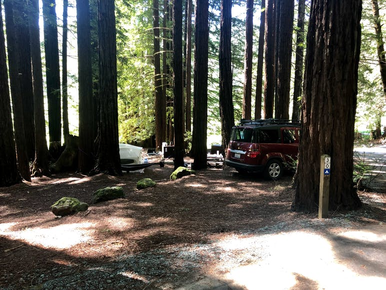 trees and car at campground