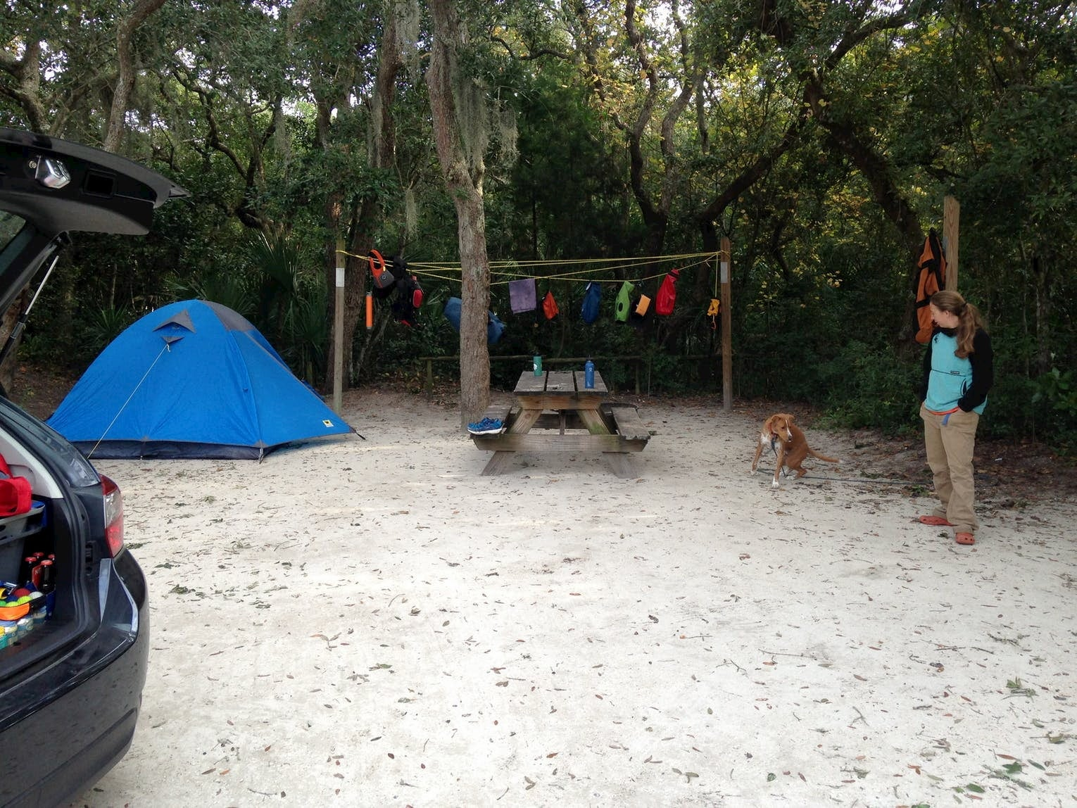 Blue tent setup beside clothes line at a campground with a woman and her dog.