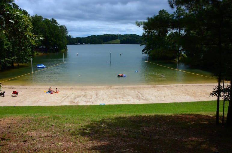 beach and tress on lake