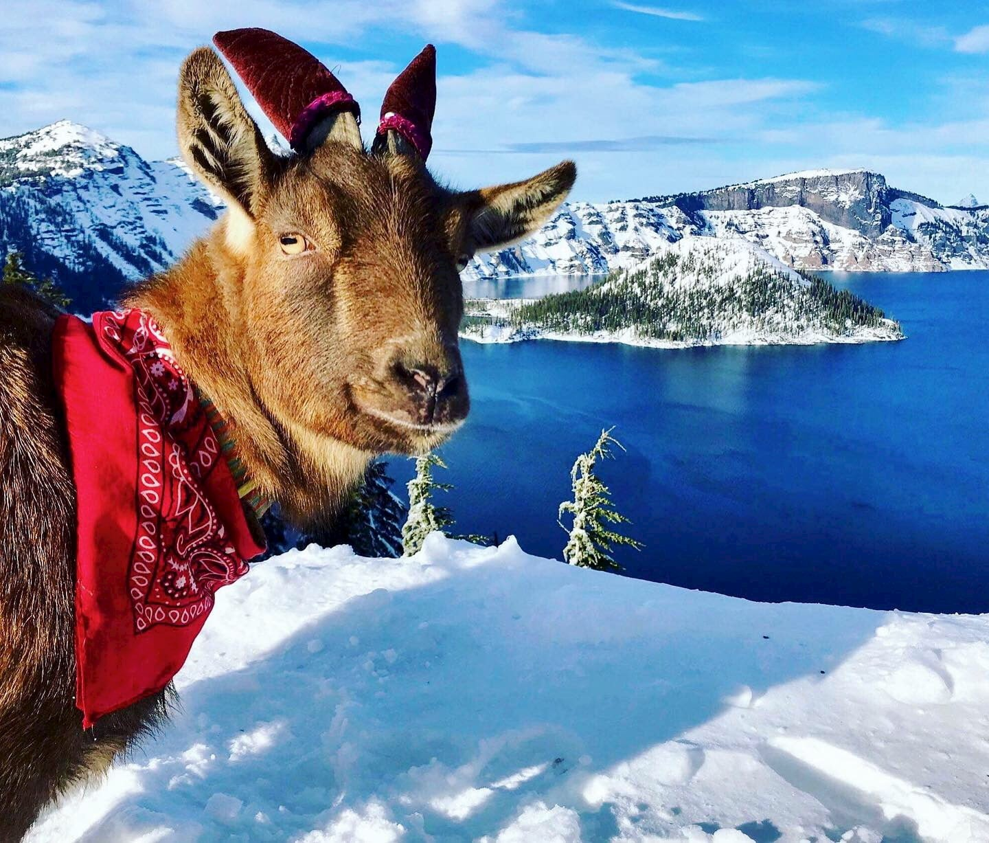 Small goat stnading in front of a snow covered crater lake.