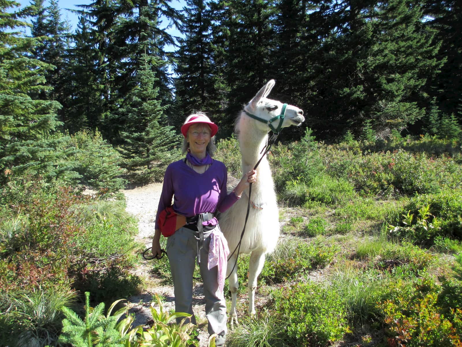 Female hiker with visor and fanny pack poses with a llama in the backcountry.