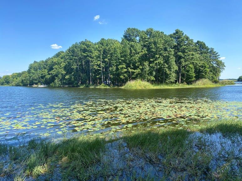 water and trees at martin creek lake state park