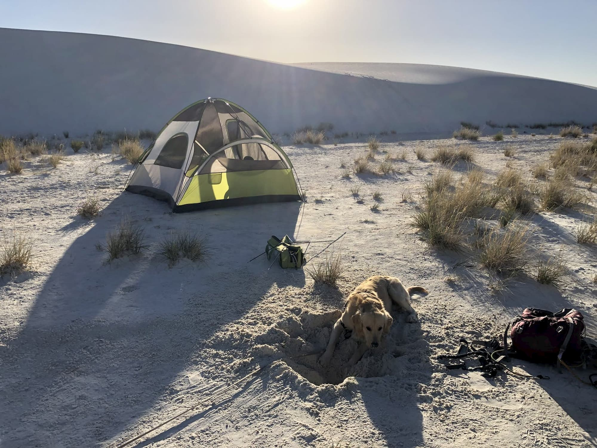 Green tent in front of white sand dune with a golden retriever lying next to it.