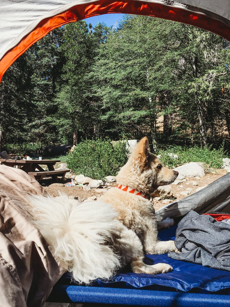 puppy hanging out in tent with trees in background