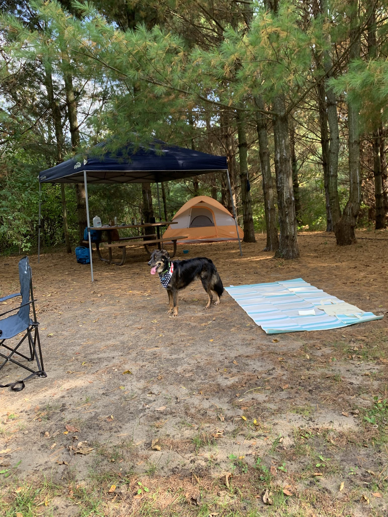 dog tent and rug at campsite
