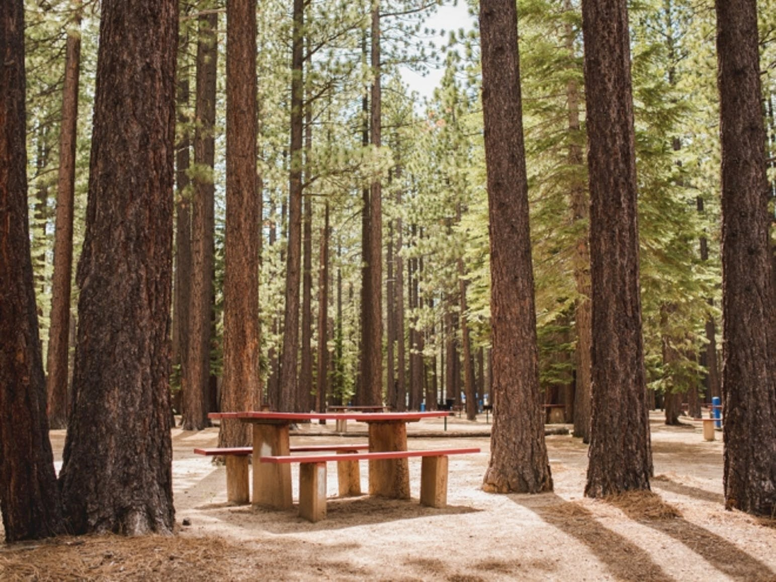 Picnic table at a campsite in sunlit redwood forest.