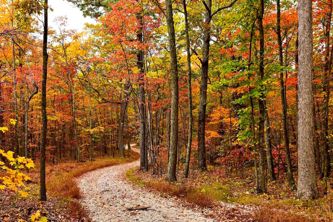 Kanawha State Forest, West Virginia
