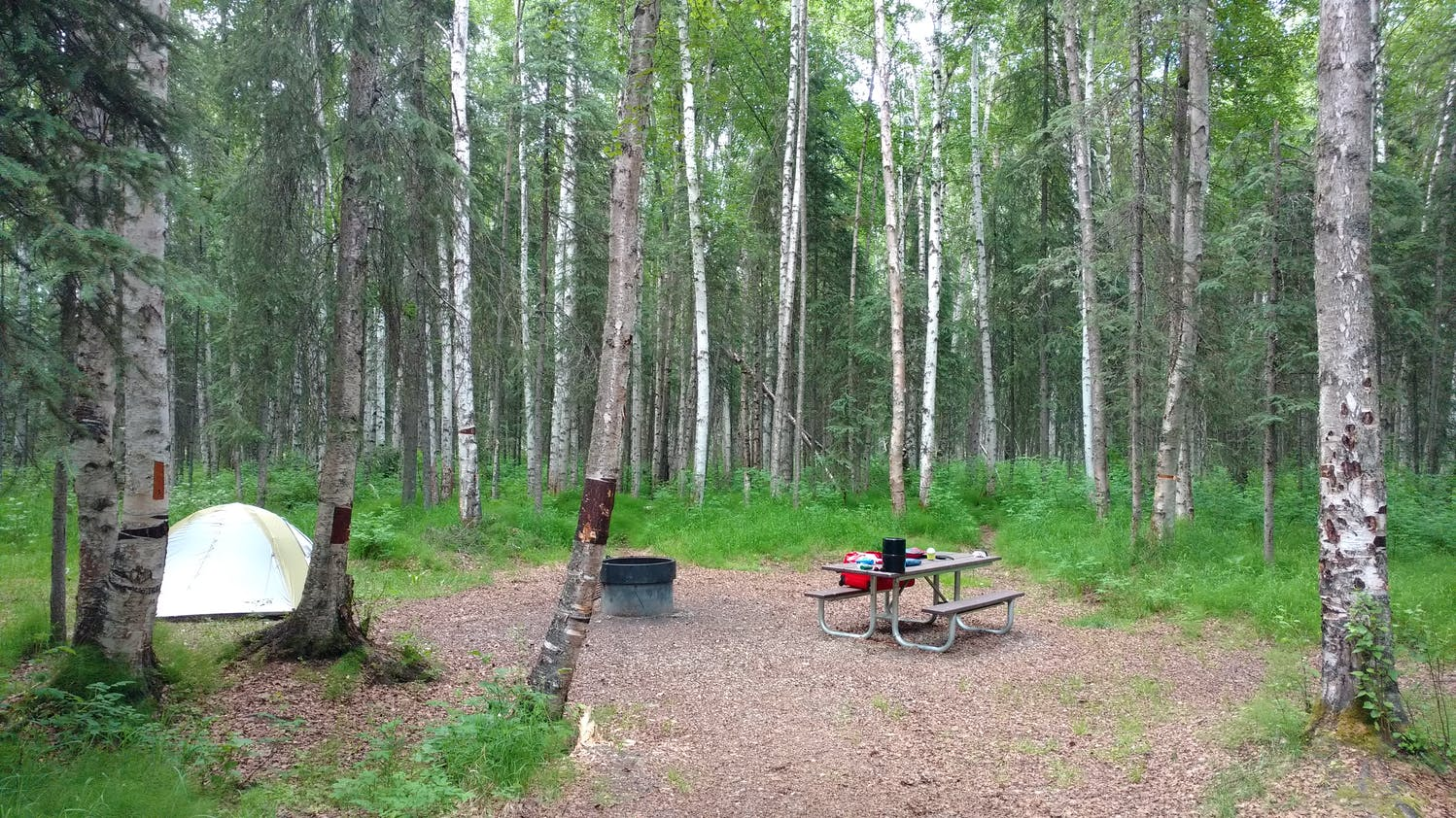 Campsite within a forest of Aspens and a picnic table in Chena River SR.