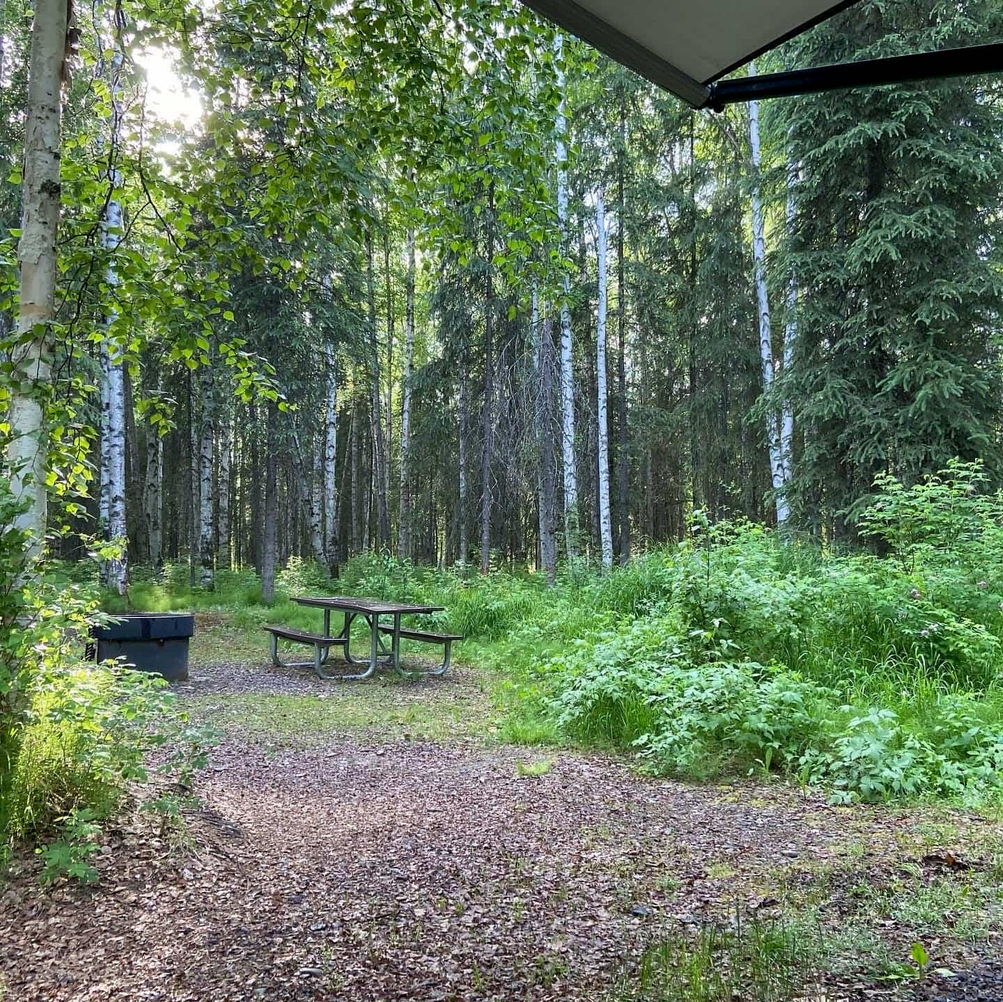 Campsite with picnic table and fire pit surrounded by aspen trees.