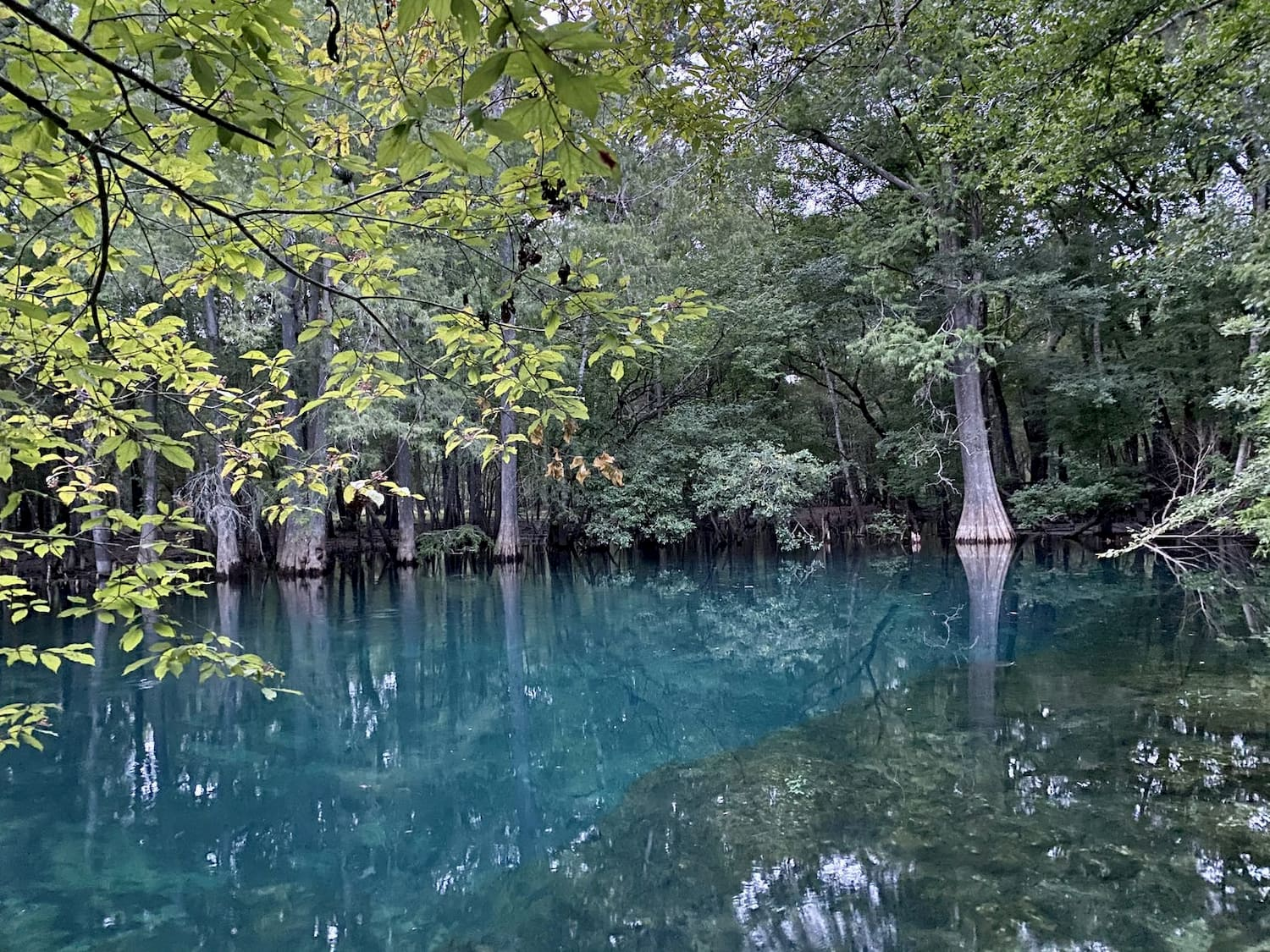 blue water at manatee springs