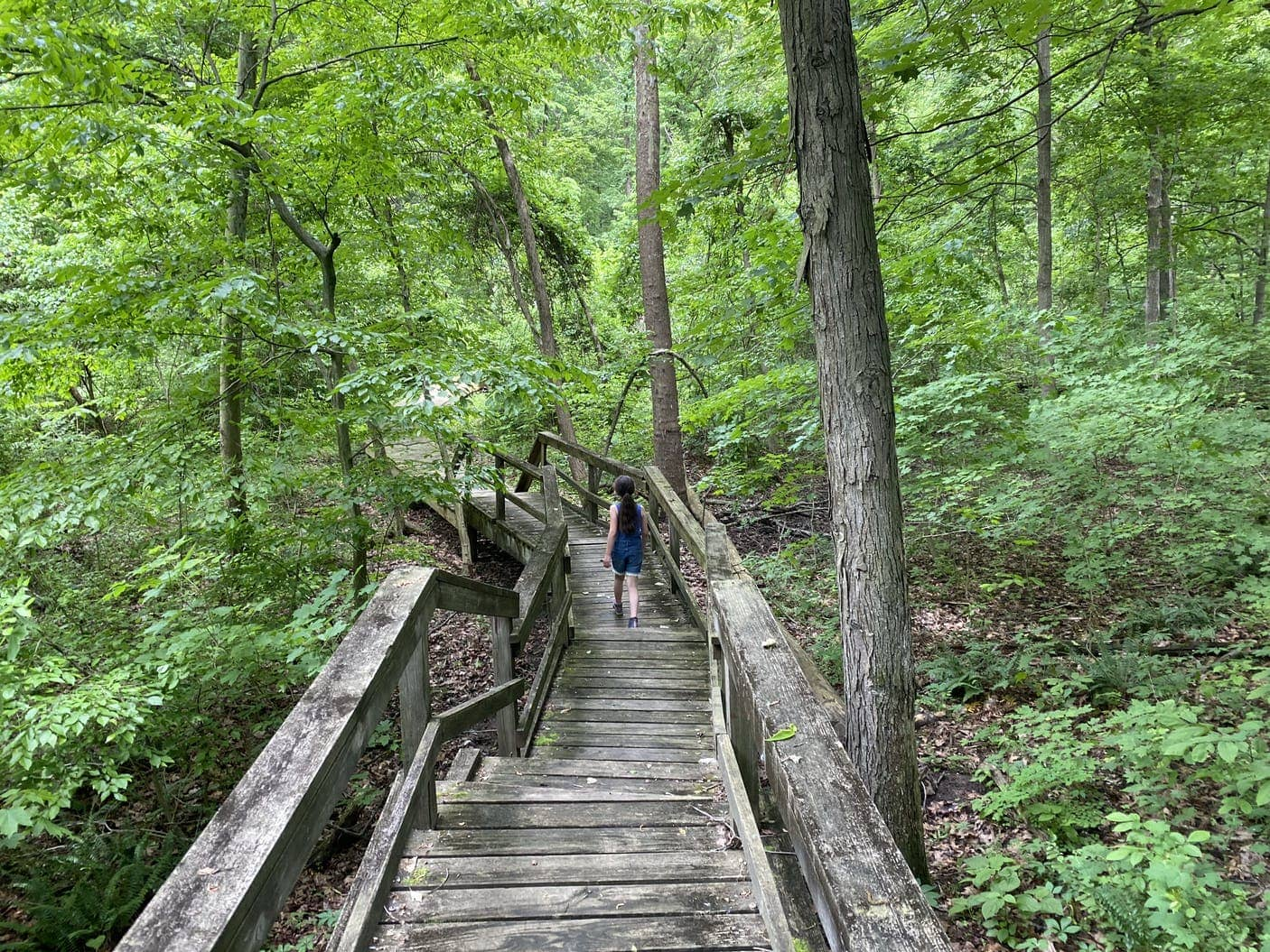 Young girl walking on wooden boardwalk through the woods.