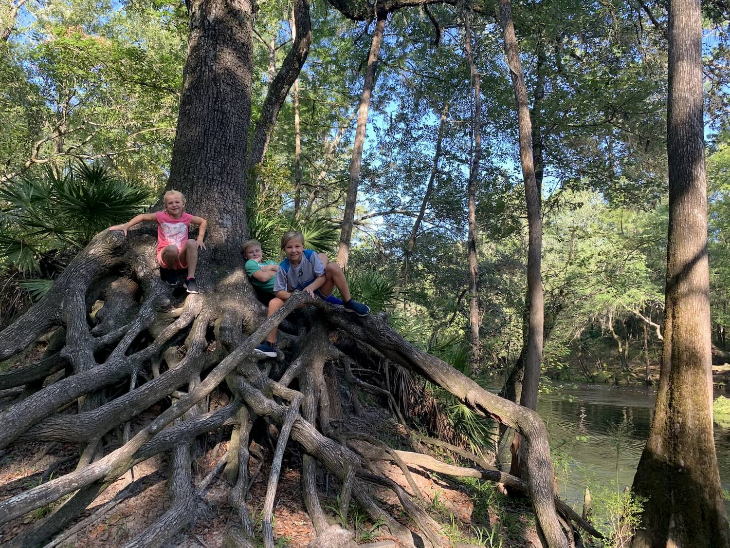 kids posing on tree roots