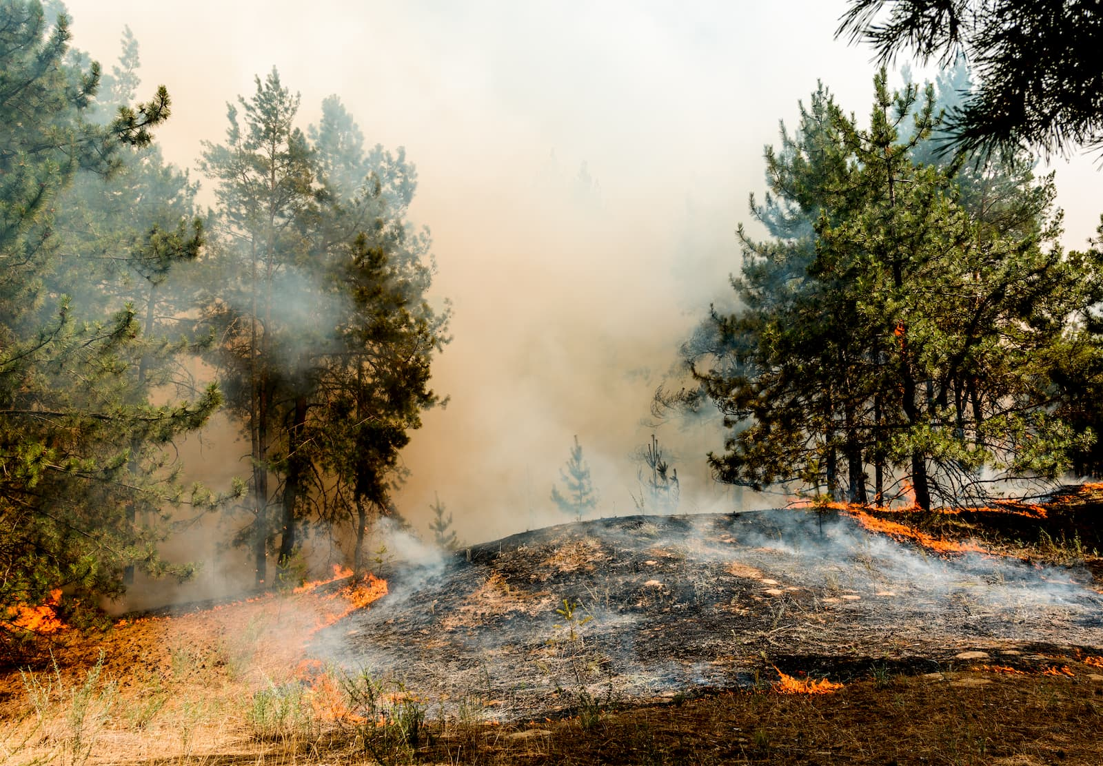Wildfires in California, Oregon, Washington and the west close public lands.