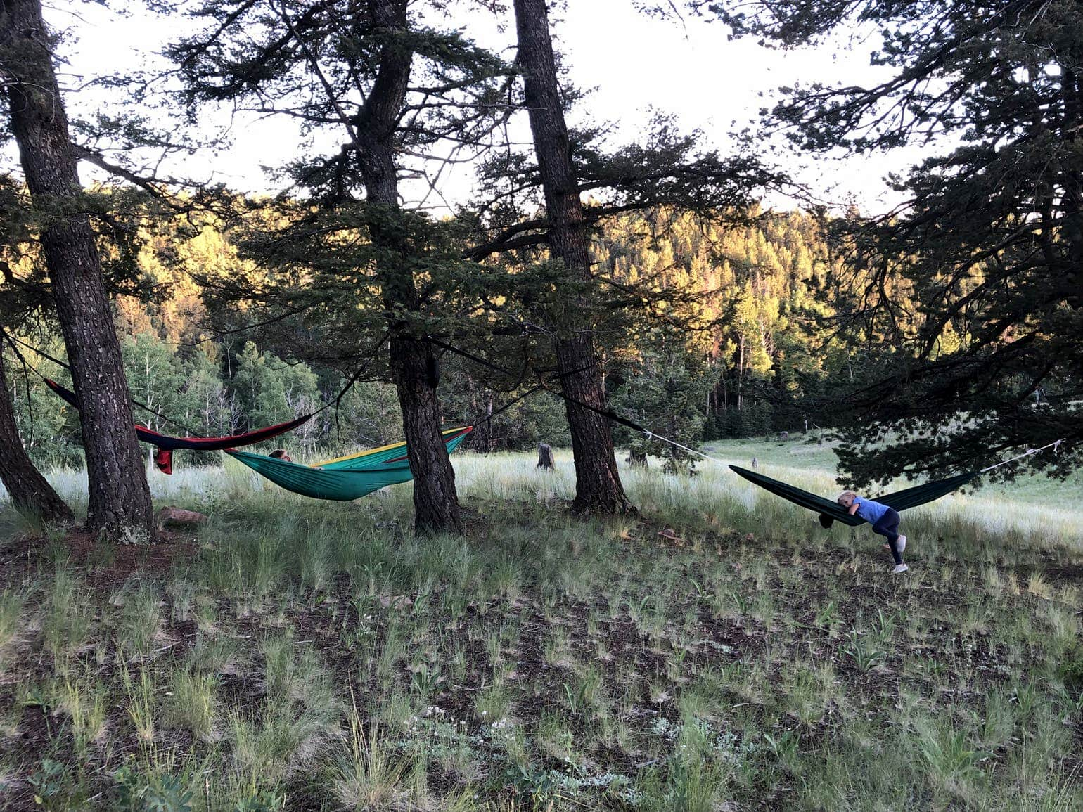 Three hammocks hang between trees at campsite outside of Colorado Springs.