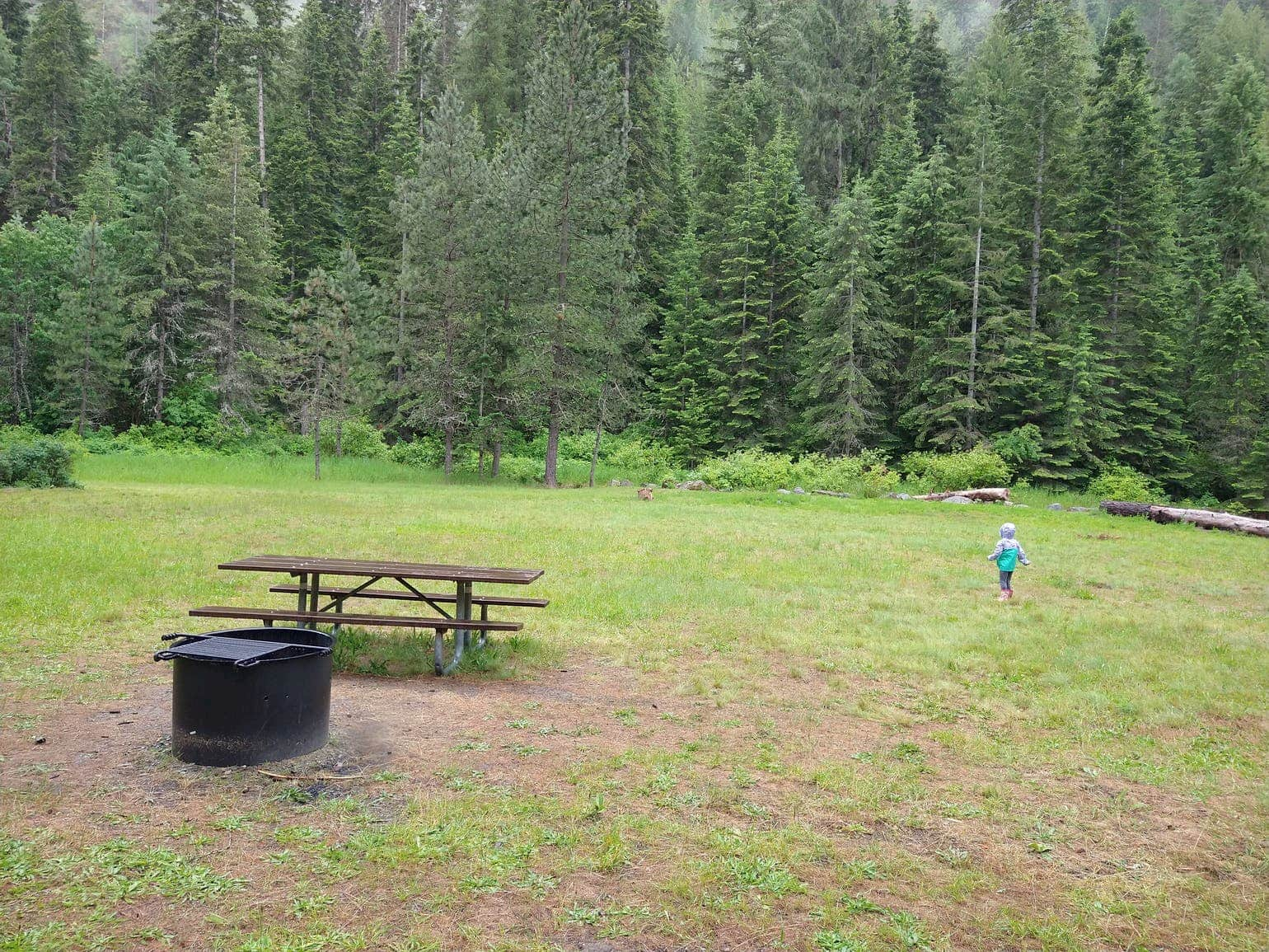 Campground in a field beside an evergreen forest with a picnic table and fire pit.