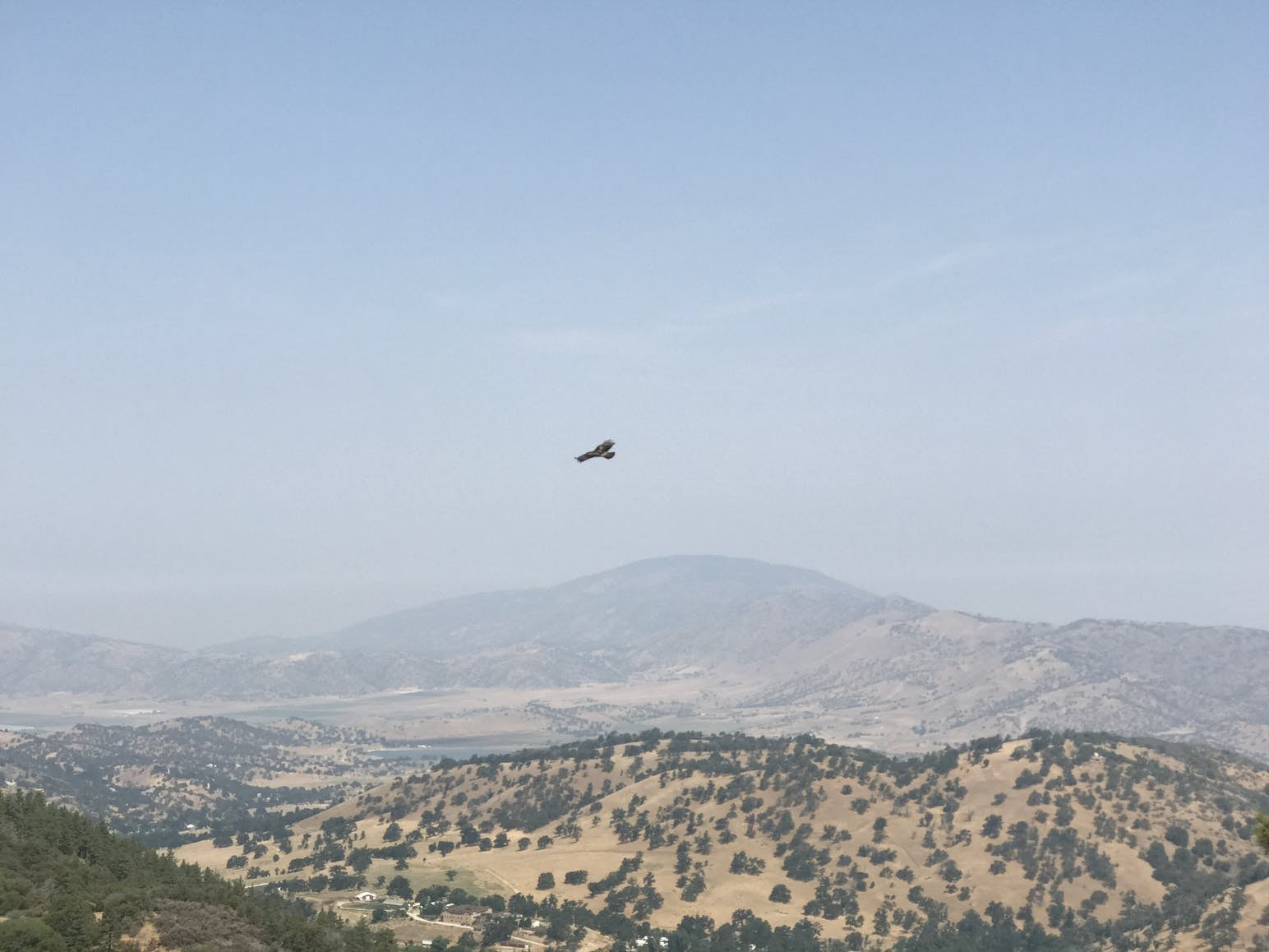 Bird flying over the mountains in California.