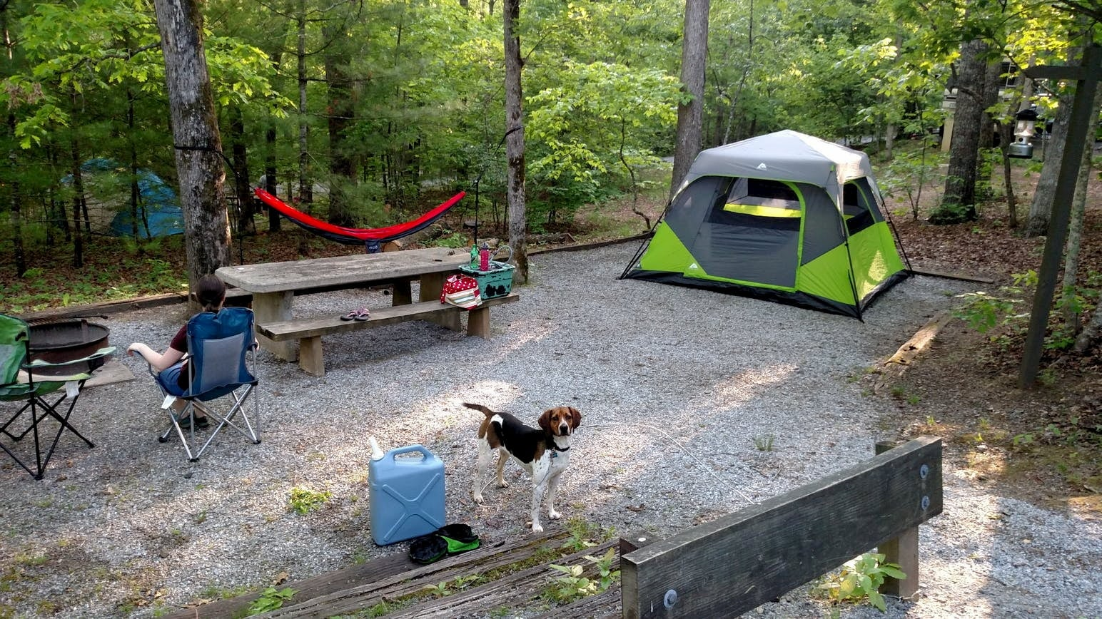 Beagle standing in Lake Powhatan campsite with tent, hammock and picnic table in the forest.