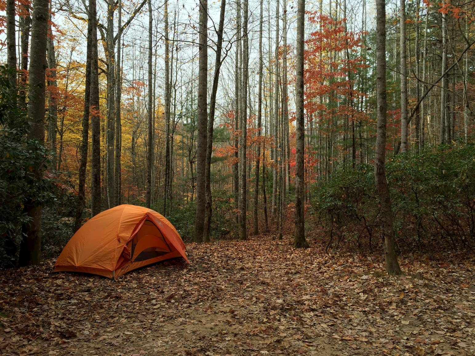 Orange tent set up inn a forested campsite surrounded by fall foliage at Mount Pisgah campground near Asheville, North Carolina.