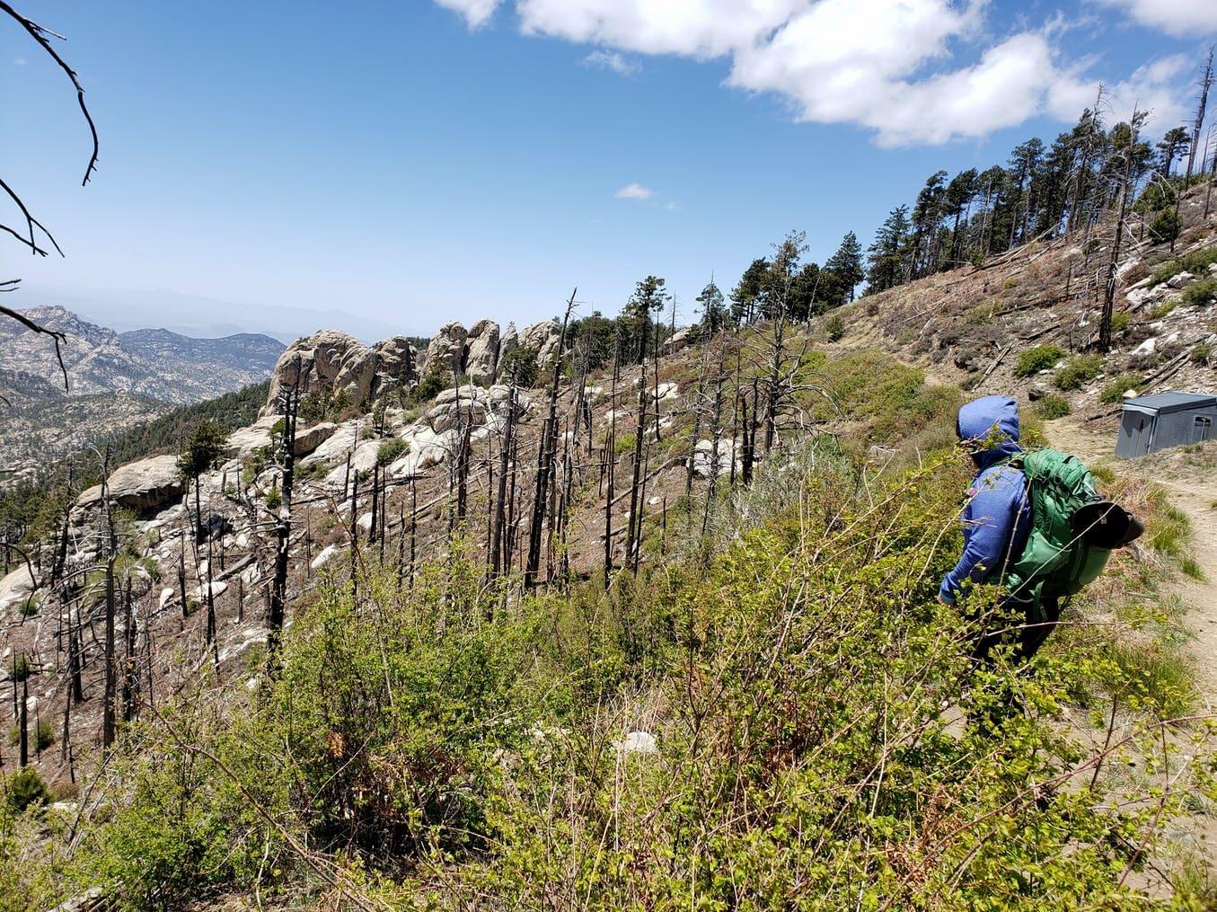 hiker overlooking burn area on mountain