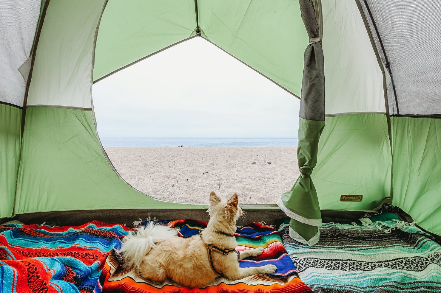 Dog sitting in tent at the beach at Thornhill Broome Campground near Santa Barbara.