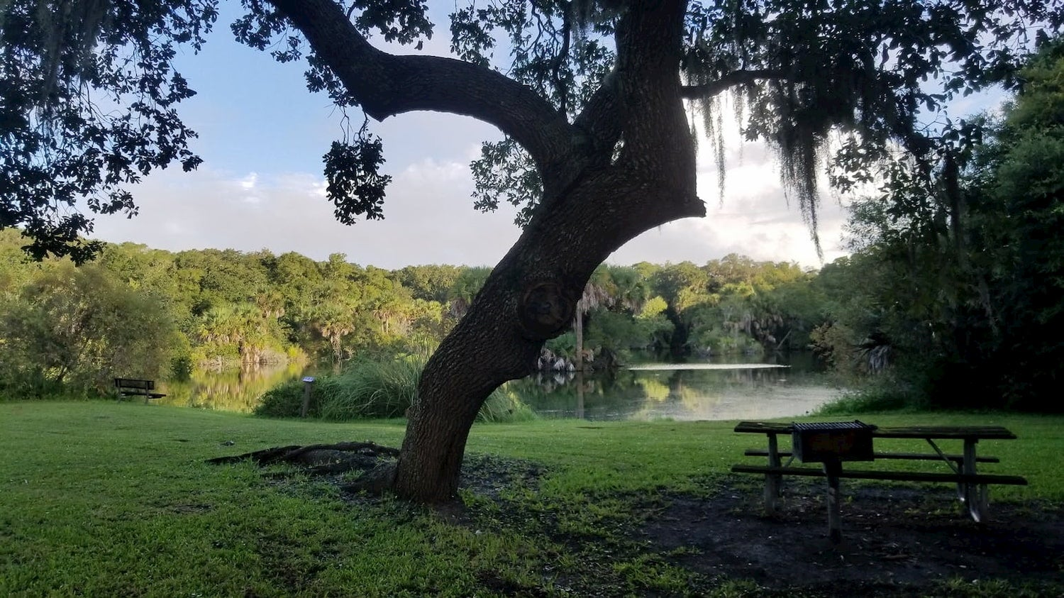 tree over picnic bench near body of water
