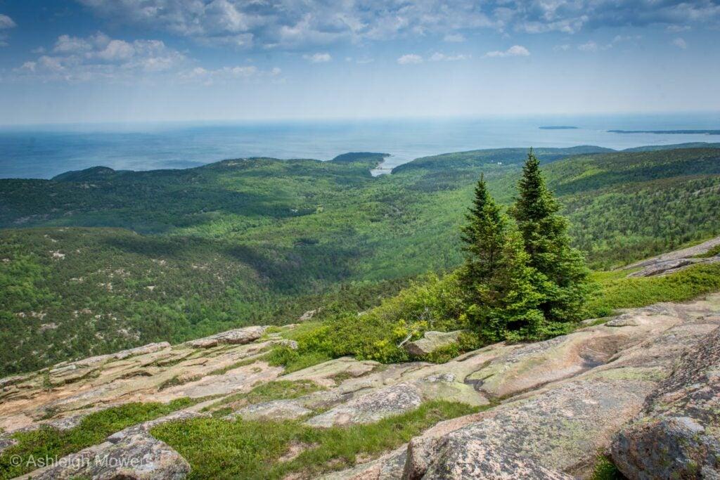 rocks, trees, and ocean