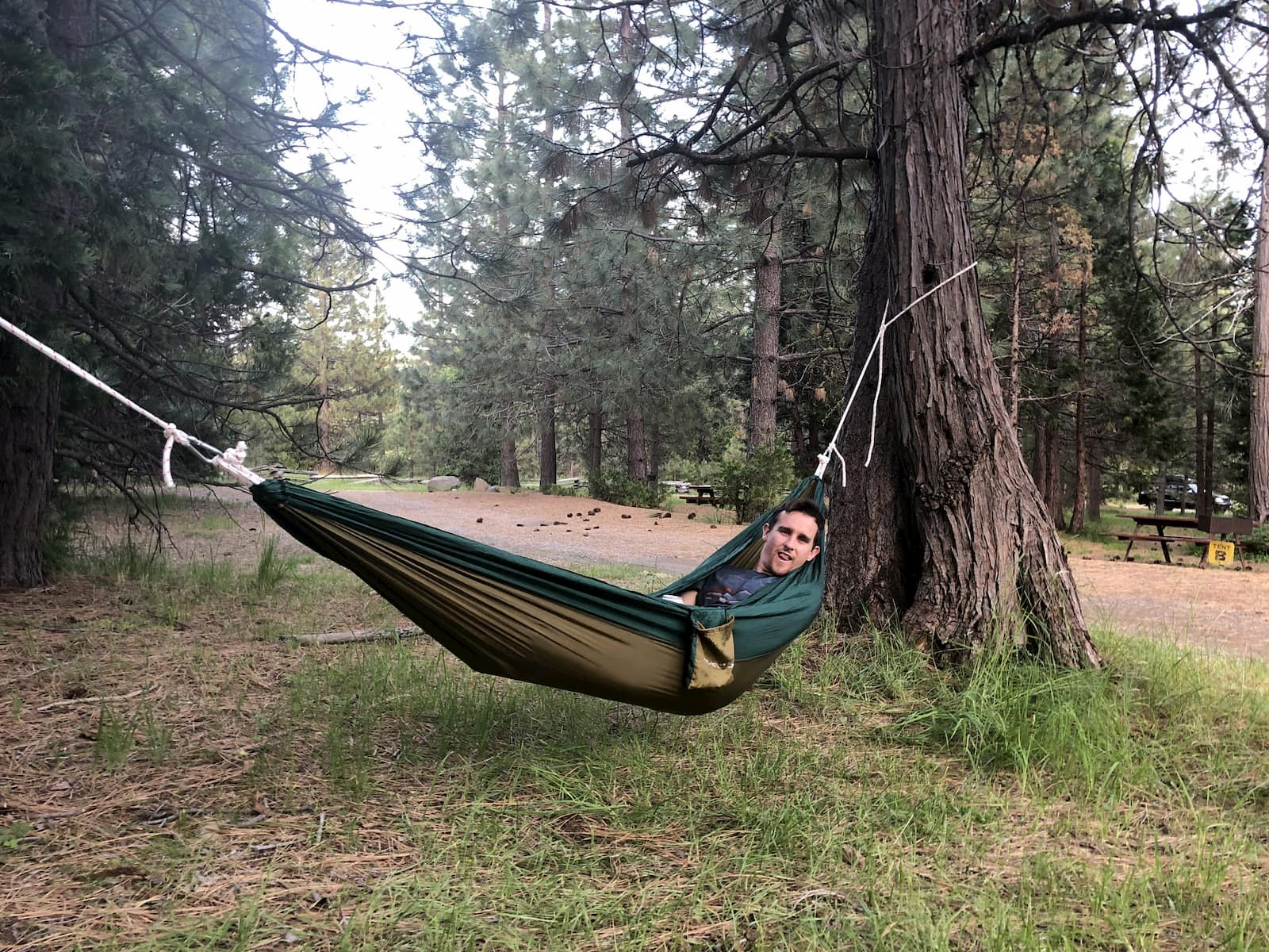 Guy laying in a brown and green hammock in a campsite wooded with large pine trees.