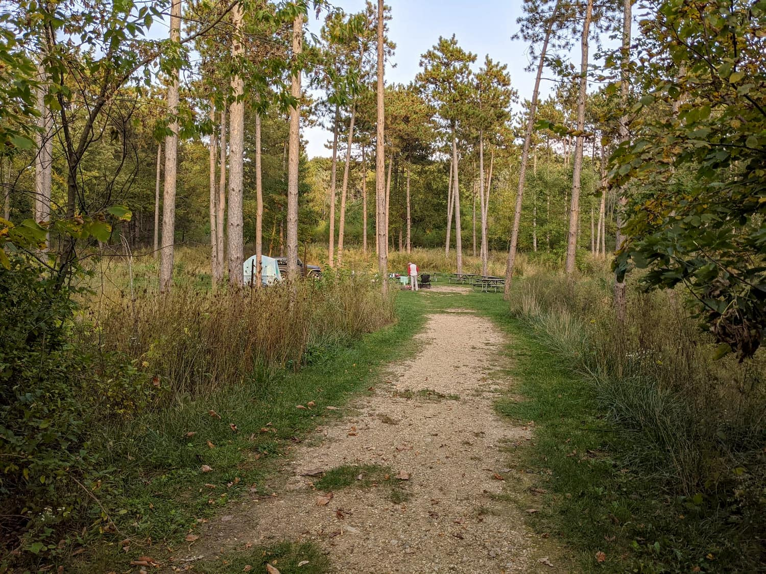image of trees at campsite