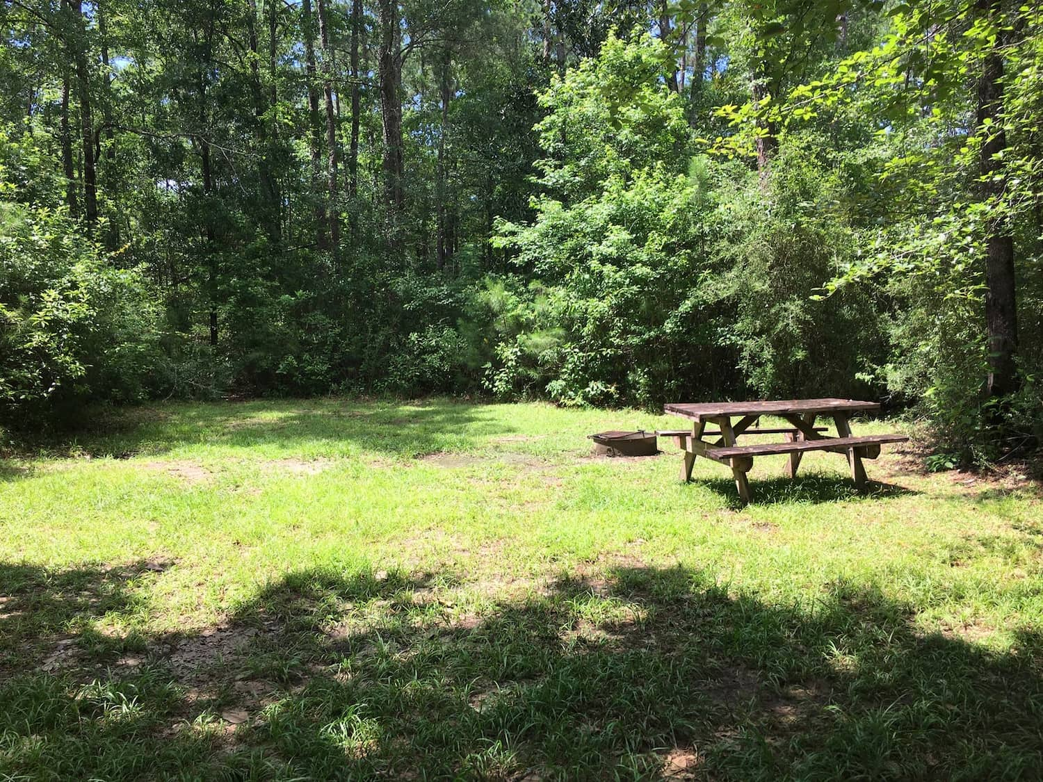 picnic table in forested field