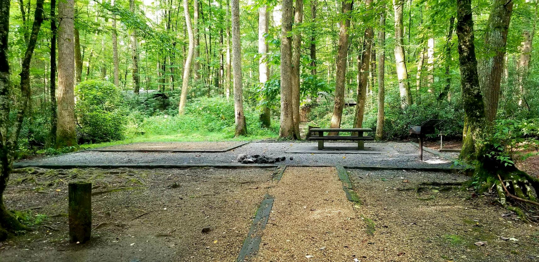 Sunlight spilling in to lush forested campsite with gravel and picnic table.