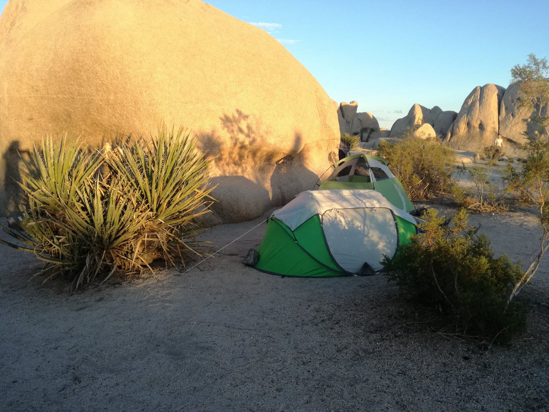 Green tent next to boulder in Joshua Tree National Park near Palm Springs.