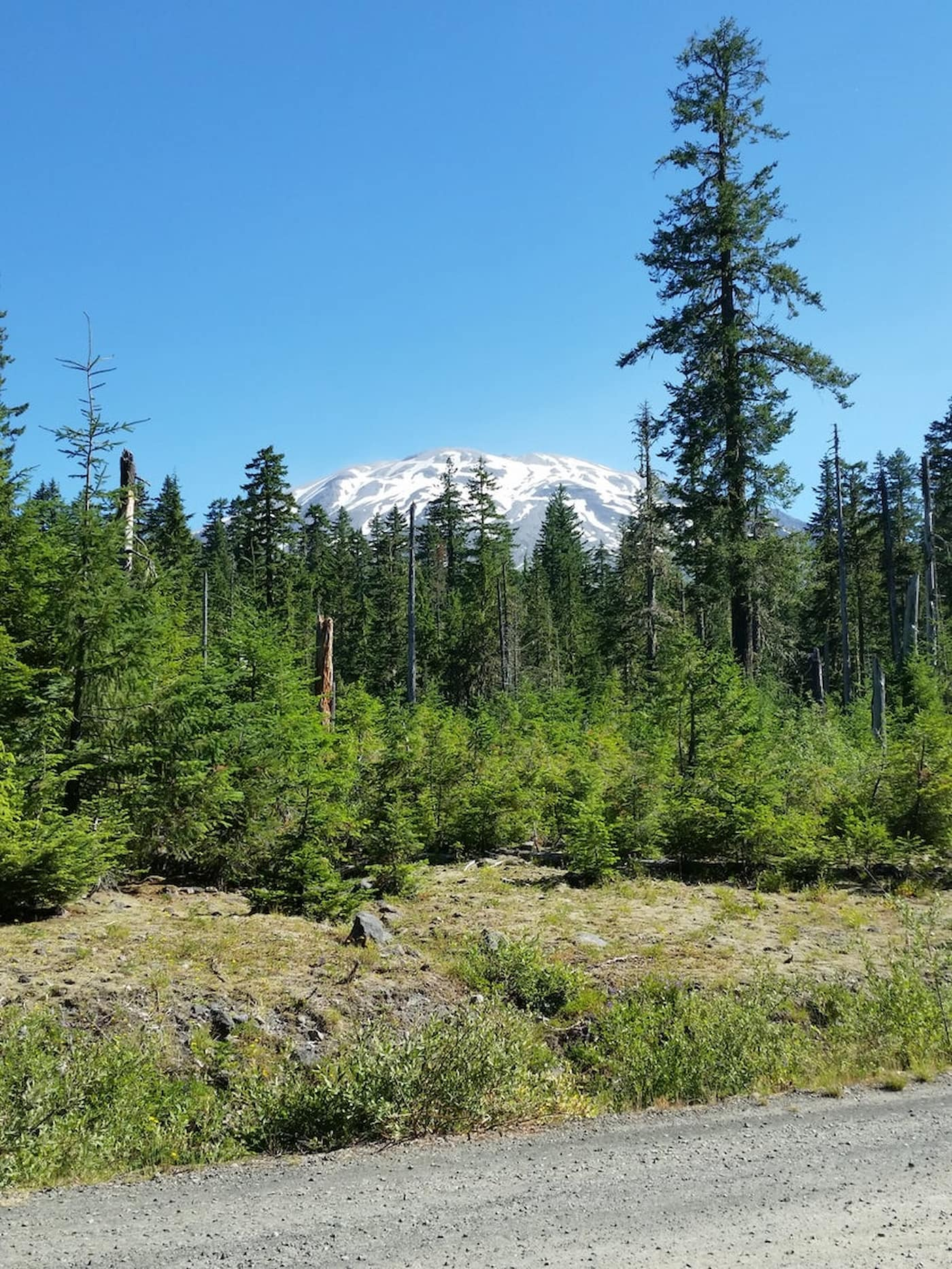 White capped Mt. St. Helens peaking out from above an evergreen forest.