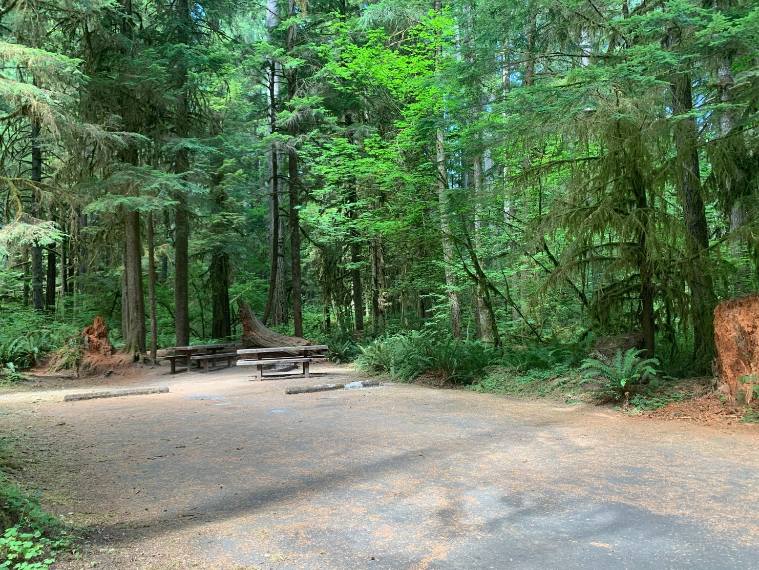 empty campsite in washington rainforest