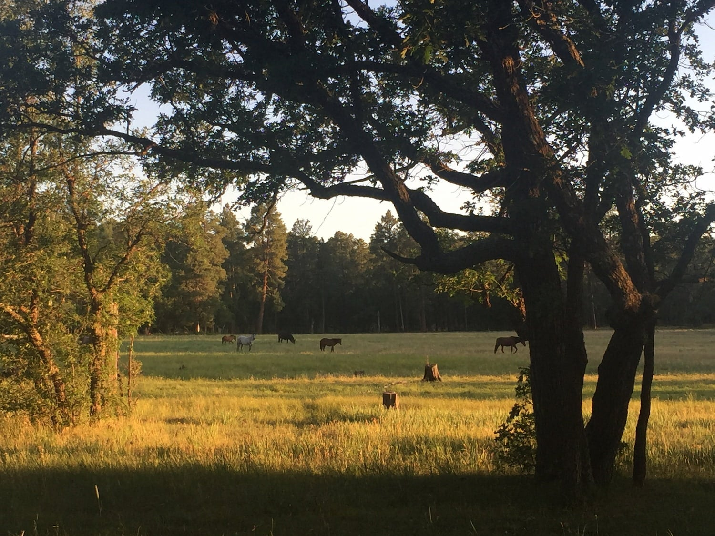 wild horses in a field