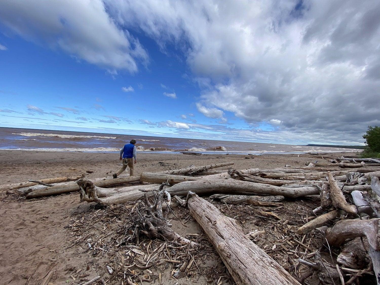 man walking on beach near driftwood